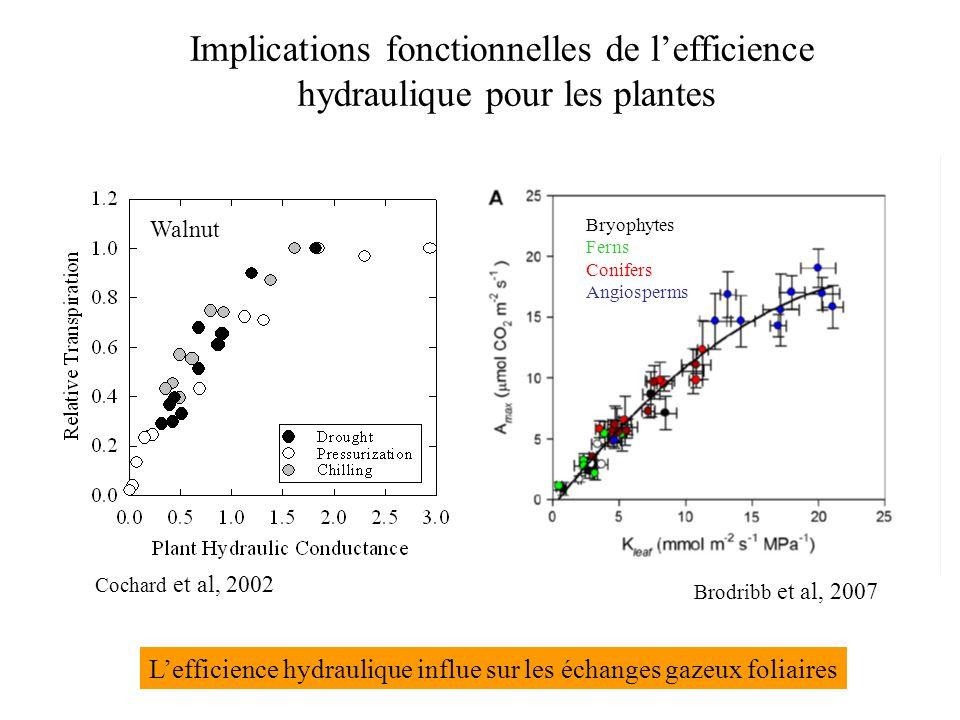 Brodribb et al, 2007 Implications fonctionnelles de l'efficience hydraulique pour les plantes Cochard et al, 2002 Walnut Bryophytes Ferns Conifers Angiosperms L'efficience hydraulique influe sur les échanges gazeux foliaires