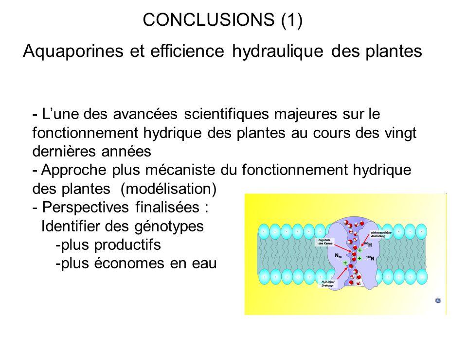 CONCLUSIONS (1) Aquaporines et efficience hydraulique des plantes - L'une des avancées scientifiques majeures sur le fonctionnement hydrique des plant