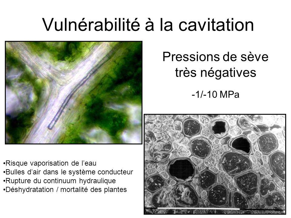 Vulnérabilité à la cavitation Pressions de sève très négatives -1/-10 MPa Risque vaporisation de l'eau Bulles d'air dans le système conducteur Rupture du continuum hydraulique Déshydratation / mortalité des plantes