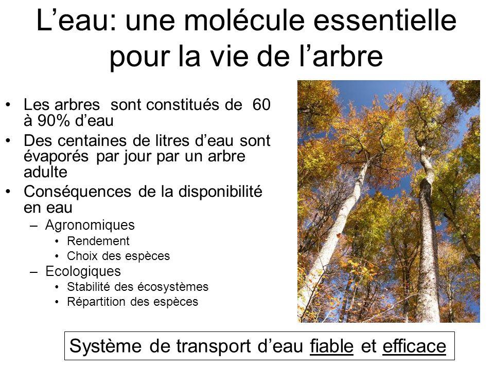 L'eau: une molécule essentielle pour la vie de l'arbre Les arbres sont constitués de 60 à 90% d'eau Des centaines de litres d'eau sont évaporés par jour par un arbre adulte Conséquences de la disponibilité en eau –Agronomiques Rendement Choix des espèces –Ecologiques Stabilité des écosystèmes Répartition des espèces Système de transport d'eau fiable et efficace
