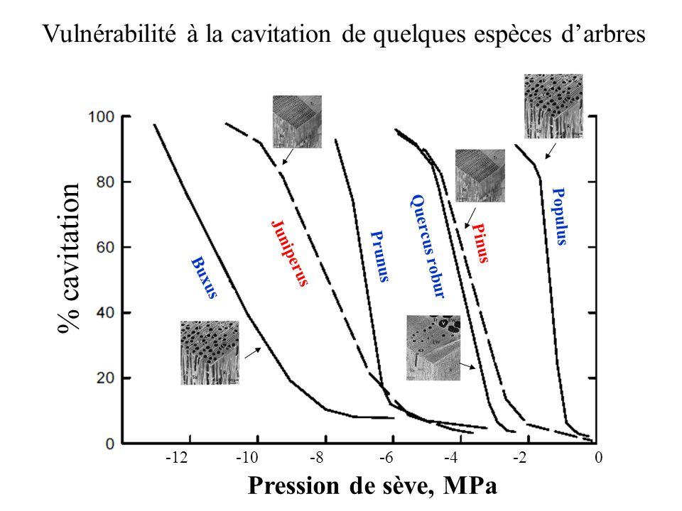 Pression de sève, MPa 0 -2-4-6-8-10-12 % cavitation Populus Quercus robur Pinus Prunus Juniperus Buxus Vulnérabilité à la cavitation de quelques espèces d'arbres