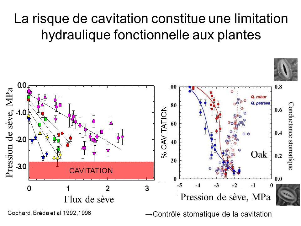 Pression de sève, MPa % CAVITATION →Contrôle stomatique de la cavitation Oak La risque de cavitation constitue une limitation hydraulique fonctionnell