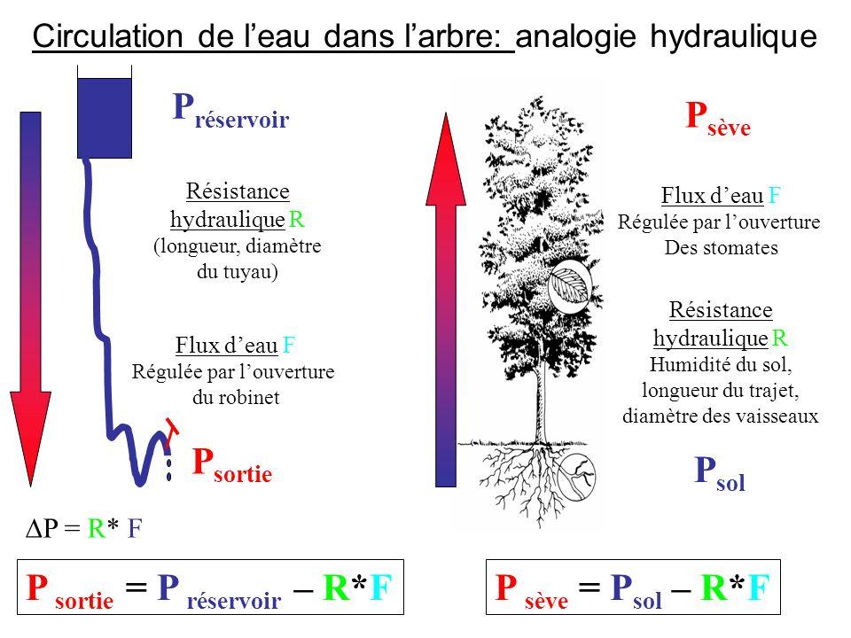 Circulation de l'eau dans l'arbre: analogie hydraulique P sortie Résistance hydraulique R (longueur, diamètre du tuyau)  P = R* F P sortie = P réservoir – R*F Résistance hydraulique R Humidité du sol, longueur du trajet, diamètre des vaisseaux P sol P sève P réservoir Flux d'eau F Régulée par l'ouverture du robinet P sève = P sol – R*F Flux d'eau F Régulée par l'ouverture Des stomates