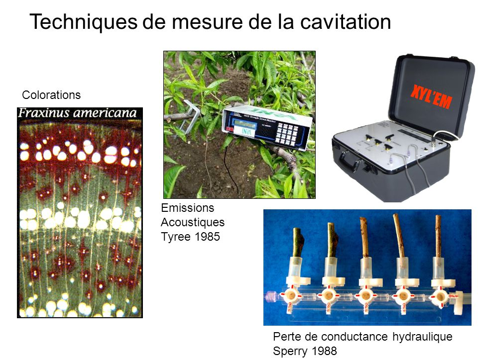 XYL'EM Techniques de mesure de la cavitation Colorations Emissions Acoustiques Tyree 1985 Perte de conductance hydraulique Sperry 1988
