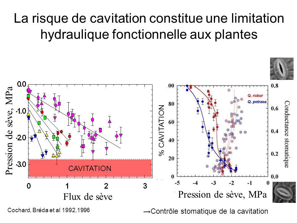 Oak La risque de cavitation constitue une limitation hydraulique fonctionnelle aux plantes Pression de sève, MPa Flux de sève Pression de sève, MPa %