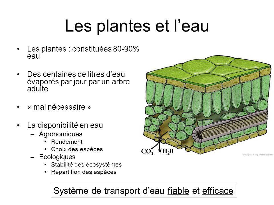 Les plantes et l'eau Les plantes : constituées 80-90% eau Des centaines de litres d'eau évaporés par jour par un arbre adulte « mal nécessaire » La di