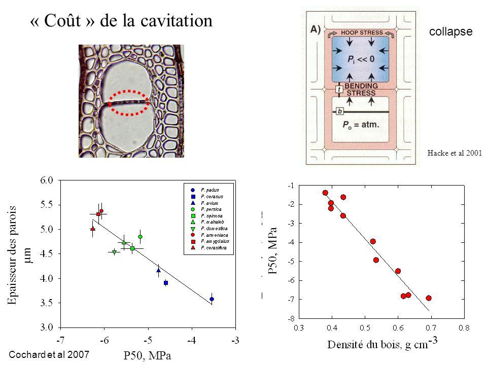 P50, MPa « Coût » de la cavitation Hacke et al 2001 Epaisseur des parois µm P50, MPa Cochard et al 2007 collapse