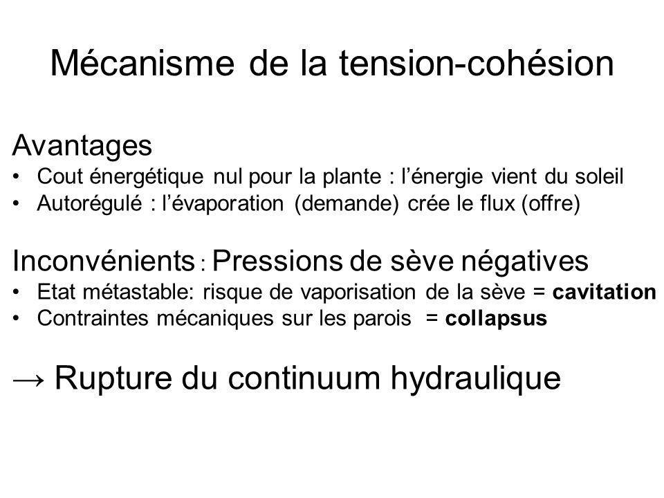 Mécanisme de la tension-cohésion Avantages Cout énergétique nul pour la plante : l'énergie vient du soleil Autorégulé : l'évaporation (demande) crée l