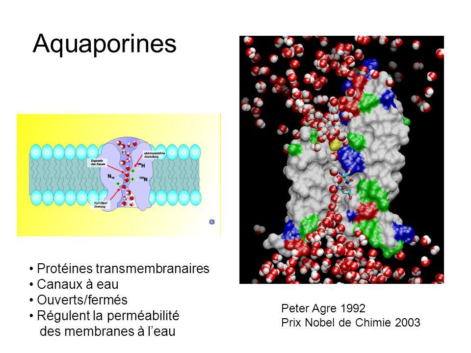Peter Agre 1992 Prix Nobel de Chimie 2003 Aquaporines Protéines transmembranaires Canaux à eau Ouverts/fermés Régulent la perméabilité des membranes à