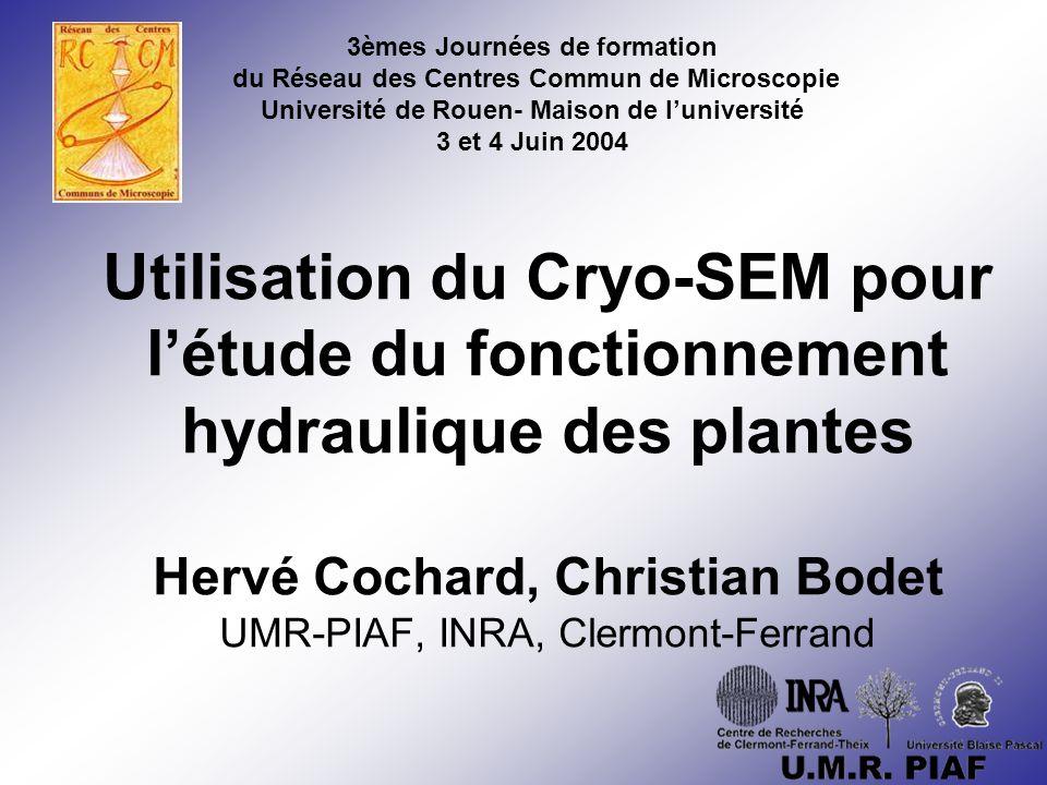 Le Cryo-SEM en qqes mots: SEM classique (Philips SEM 505) Étage cryogénique T < -80°C (Hexland CT 100) –Observation –Métallisation En dessous du point de sublimation de la glace Observation d'échantillons hydratés mais congelés Hypothèse: le mode préparatoire des échantillons ne perturbe pas leur observation (méthode directe)