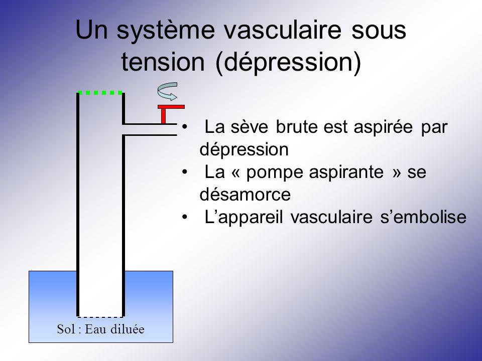 Un système vasculaire sous tension (dépression) Sol : Eau diluée La sève brute est aspirée par dépression La « pompe aspirante » se désamorce L'appare