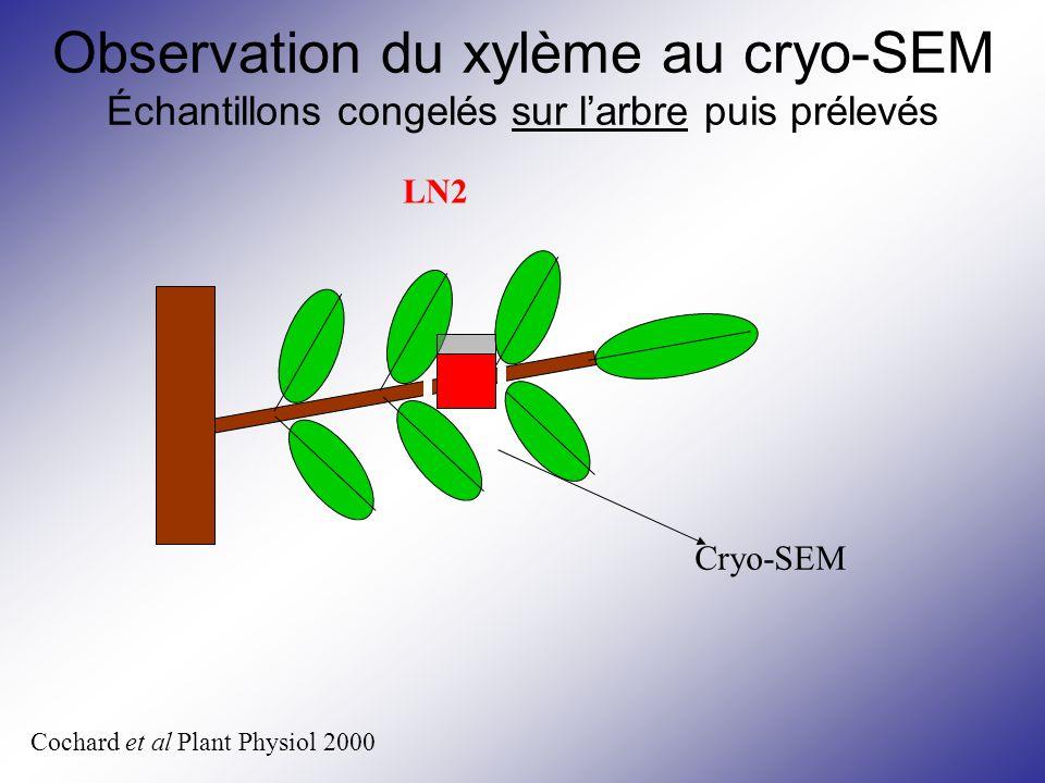 Cochard et al Plant Physiol 2000 Cryo-SEM LN2 Observation du xylème au cryo-SEM Échantillons congelés sur l'arbre puis prélevés