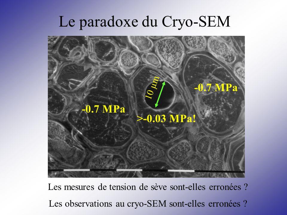 -0.7 MPa 10 µm >-0.03 MPa! -0.7 MPa Le paradoxe du Cryo-SEM Les mesures de tension de sève sont-elles erronées ? Les observations au cryo-SEM sont-ell