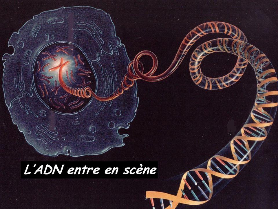 L'ADN entre en scène