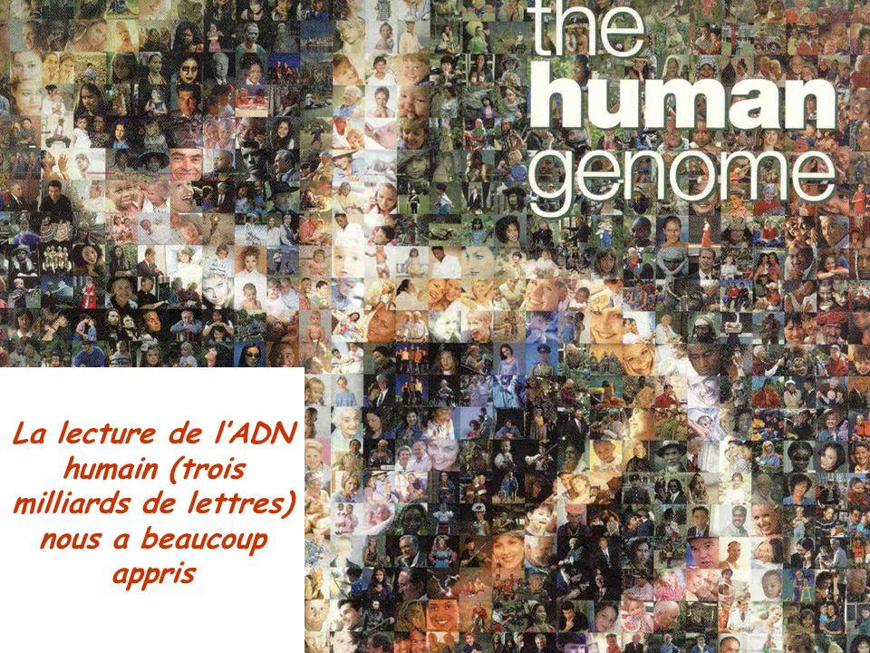 Bertrand JORDAN Informations débats 21 novembre 2006 La lecture de l'ADN humain (trois milliards de lettres) nous a beaucoup appris