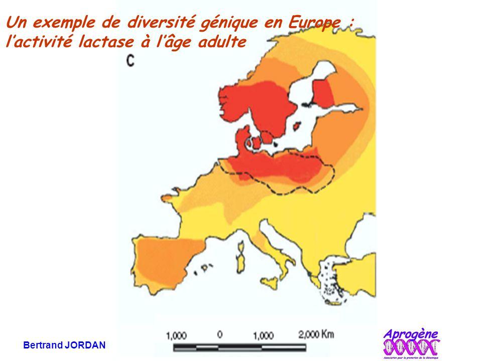 Bertrand JORDAN Informations débats 21 novembre 2006 Un exemple de diversité génique en Europe : l'activité lactase à l'âge adulte