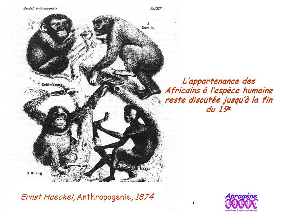 Bertrand JORDAN Informations débats 21 novembre 2006 Ernst Haeckel, Anthropogenie, 1874 L'appartenance des Africains à l'espèce humaine reste discutée