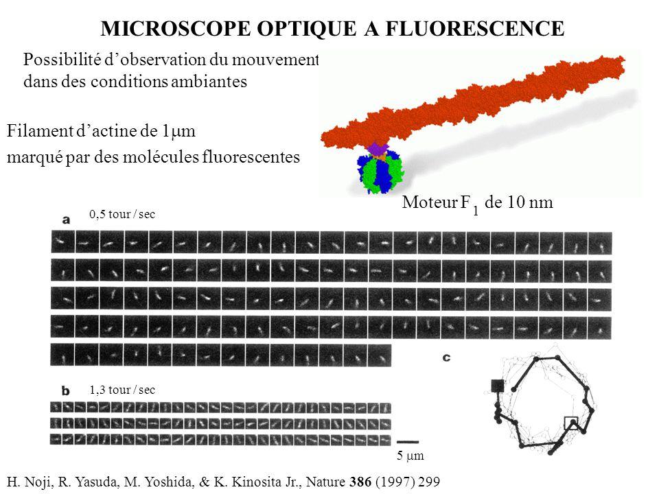 MICROSCOPE OPTIQUE A FLUORESCENCE Possibilité d'observation du mouvement dans des conditions ambiantes H. Noji, R. Yasuda, M. Yoshida, & K. Kinosita J