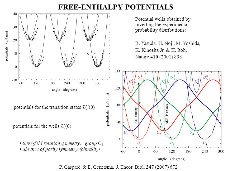 FREE-ENTHALPY POTENTIALS P. Gaspard & E. Gerritsma, J. Theor. Biol. 247 (2007) 672 Potential wells obtained by inverting the experimental probability