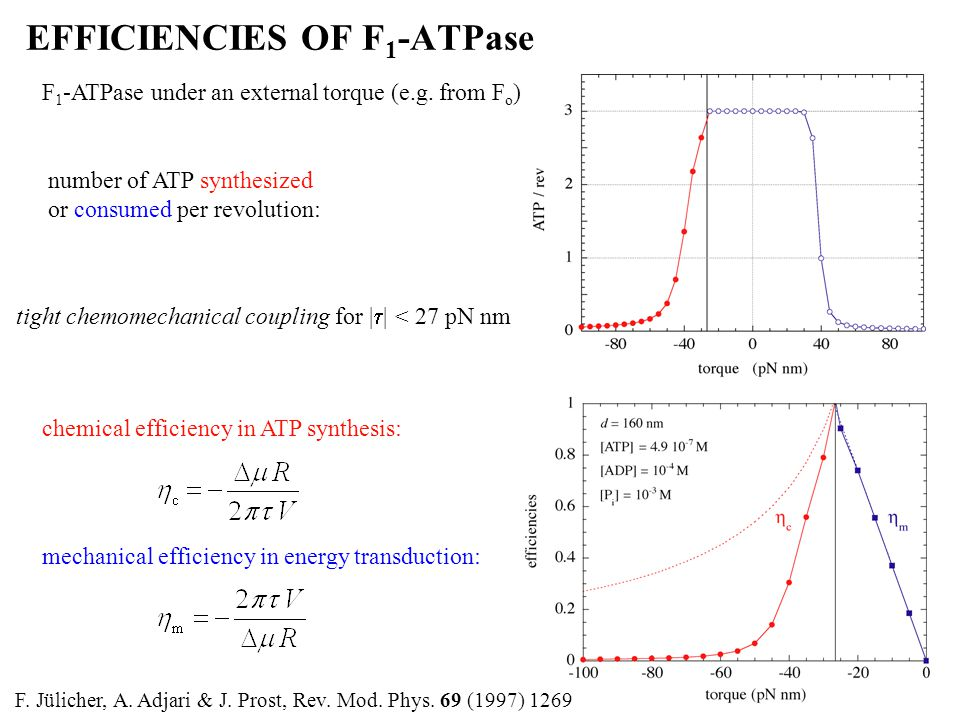 EFFICIENCIES OF F 1 -ATPase F 1 -ATPase under an external torque (e.g.