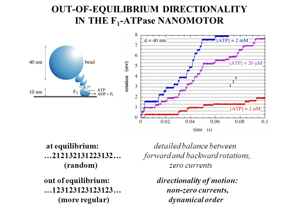 OUT-OF-EQUILIBRIUM DIRECTIONALITY IN THE F 1 -ATPase NANOMOTOR at equilibrium: detailed balance between …212132131223132… forward and backward rotations, (random) zero currents out of equilibrium: directionality of motion: …123123123123123… non-zero currents, (more regular) dynamical order   