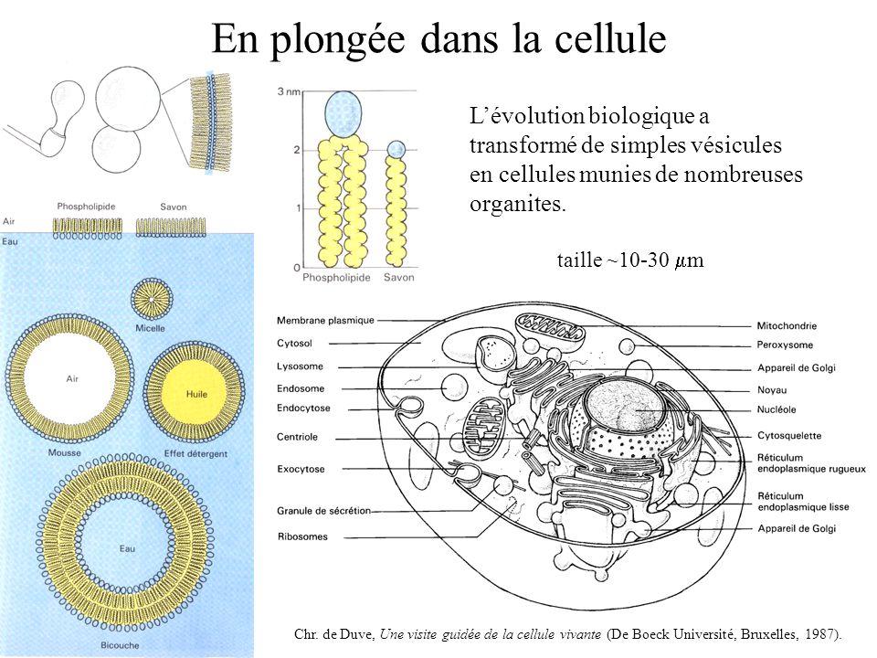En plongée dans la cellule L'évolution biologique a transformé de simples vésicules en cellules munies de nombreuses organites.