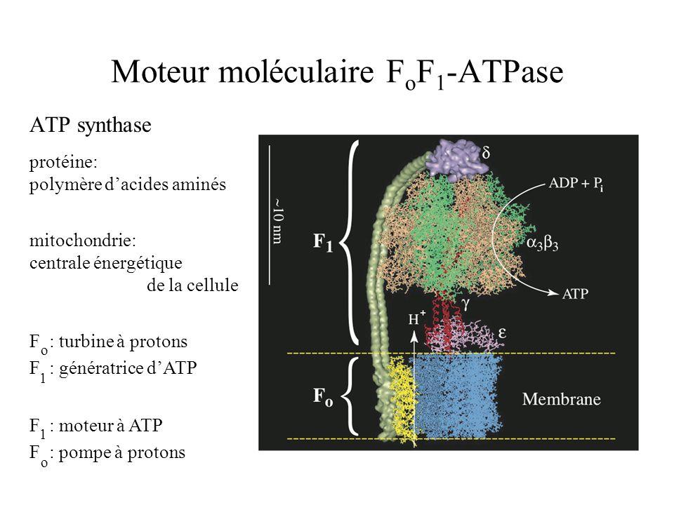 Moteur moléculaire F o F 1 -ATPase ATP synthase F : turbine à protons F : génératrice d'ATP mitochondrie: centrale énergétique de la cellule protéine: polymère d'acides aminés F : moteur à ATP F : pompe à protons o o 1 1