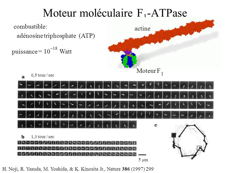 combustible: adénosine triphosphate (ATP) Moteur moléculaire F 1 -ATPase puissance = 10 Watt  18 H.