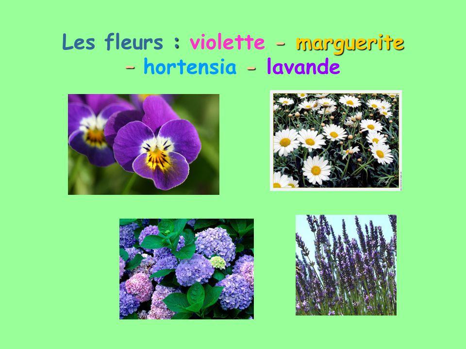 Les fleurs : violette - -- - m mm marguerite – hortensia - -- - lavande