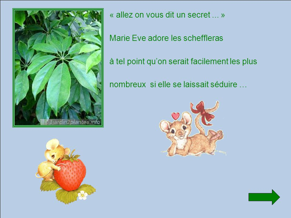 « allez on vous dit un secret...