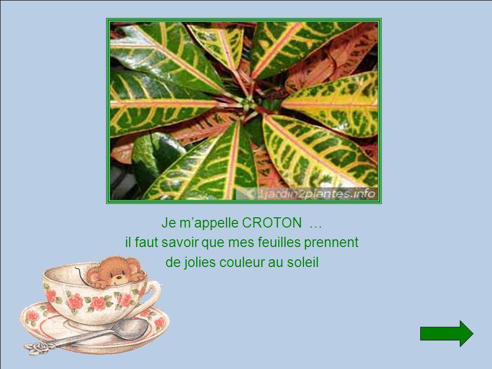 Je m'appelle CROTON … il faut savoir que mes feuilles prennent de jolies couleur au soleil