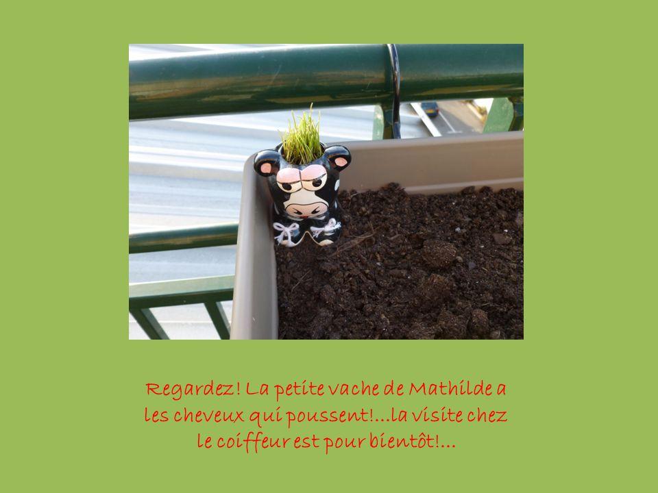 Le Jardin de Mathilde à Mantes la Ville le 13 mai 2011