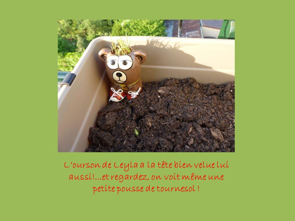 L'ourson de Leyla a la tête bien velue lui aussi!...et regardez, on voit même une petite pousse de tournesol !