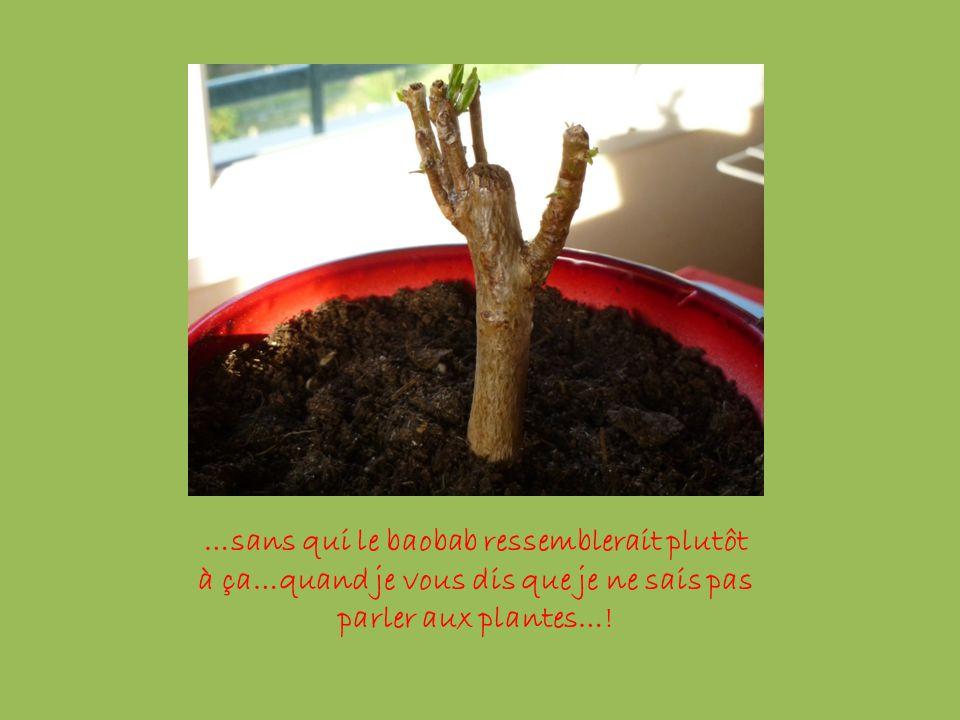 …sans qui le baobab ressemblerait plutôt à ça…quand je vous dis que je ne sais pas parler aux plantes…!