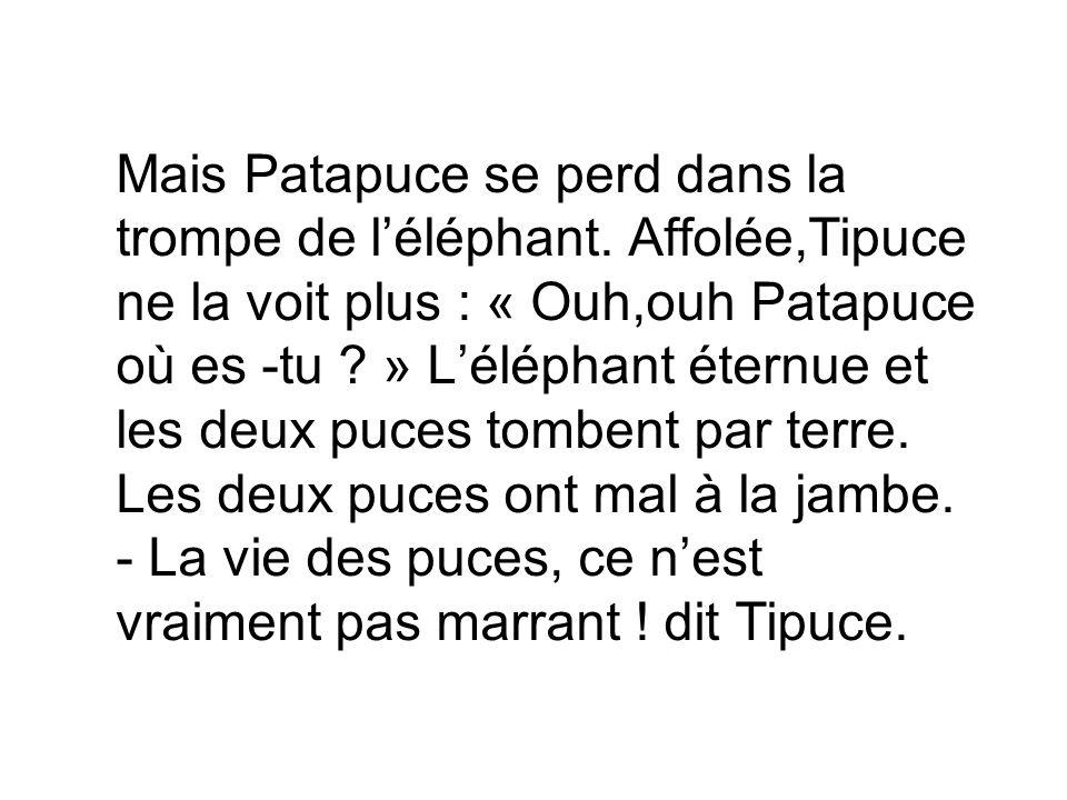 Mais Patapuce se perd dans la trompe de l'éléphant.