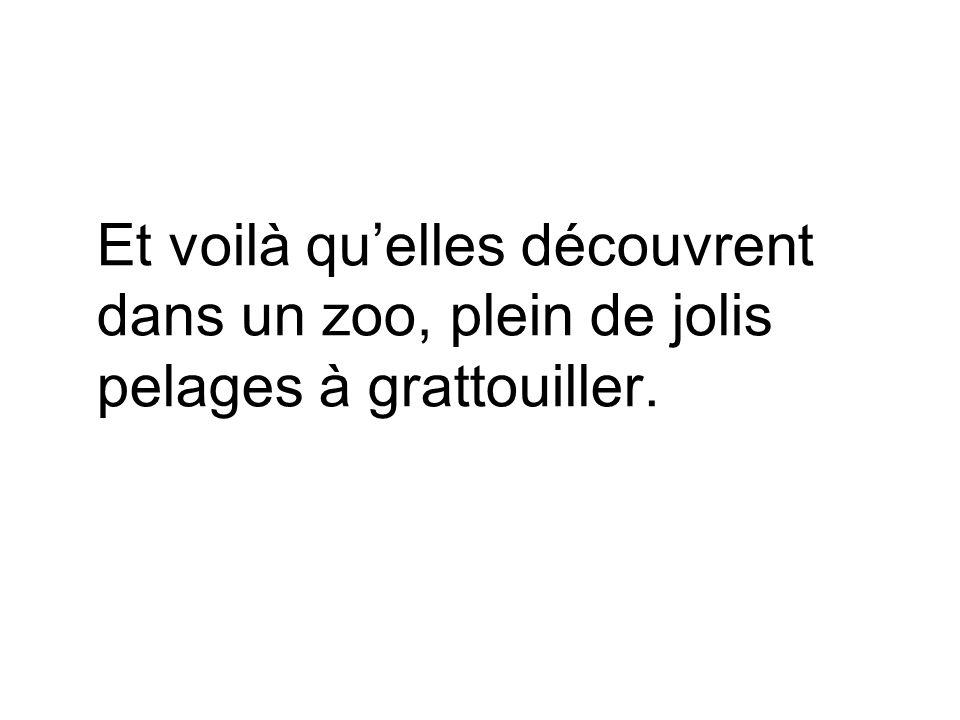 Et voilà qu'elles découvrent dans un zoo, plein de jolis pelages à grattouiller.