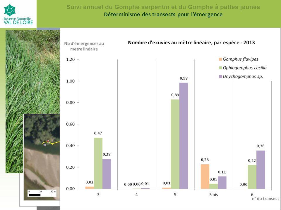 Vue du transect n°5, vers l amont, en 2011 Le transect n°5 en 2007 vu d en hautLa même zone, en 2005 Suivi annuel du Gomphe serpentin et du Gomphe à pattes jaunes Déterminisme des transects pour l'émergence