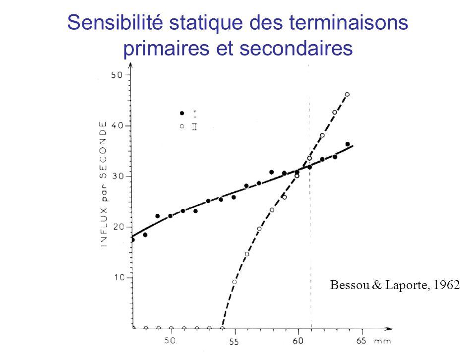 Sensibilité statique des terminaisons primaires et secondaires Bessou & Laporte, 1962