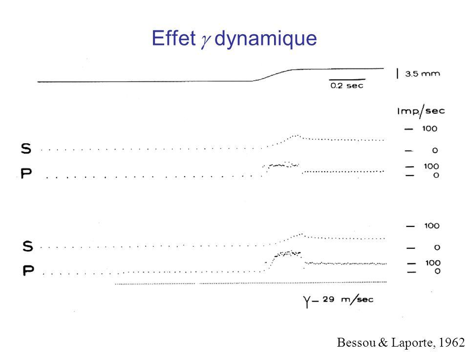 Effet  dynamique Bessou & Laporte, 1962