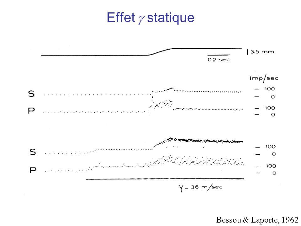 Effet  statique Bessou & Laporte, 1962