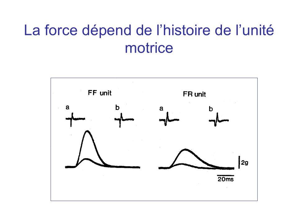 Décharge d'ensemble Horcholle-Bossavit et al,. J. Neurophysiol. 1990