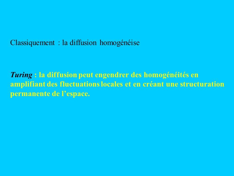 Classiquement : la diffusion homogénéise Turing : la diffusion peut engendrer des homogénéités en amplifiant des fluctuations locales et en créant une
