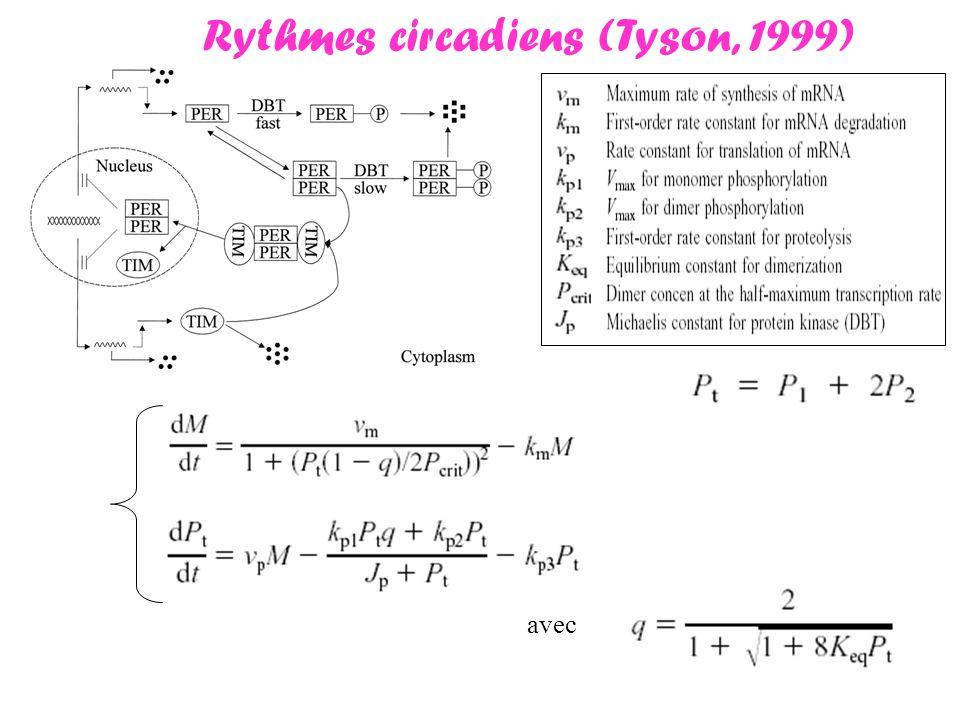 avec Rythmes circadiens (Tyson, 1999)