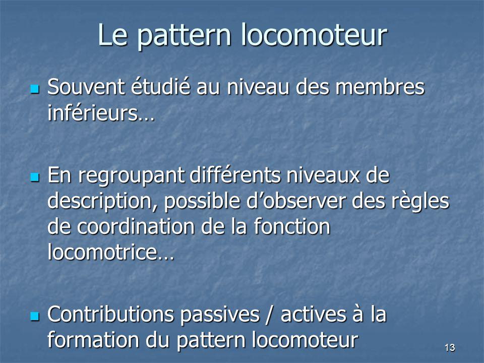 13 Le pattern locomoteur Souvent étudié au niveau des membres inférieurs… Souvent étudié au niveau des membres inférieurs… En regroupant différents ni