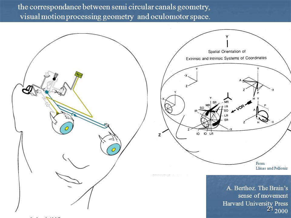21 the correspondance between semi circular canals geometry, visual motion processing geometry and oculomotor space. A. Berthoz. The Brain's sense of