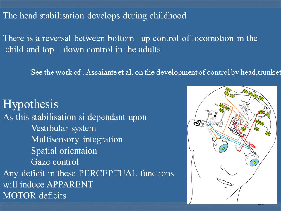 26 The head stabilisation develops during childhood There is a reversal between bottom –up control of locomotion in the child and top – down control in the adults See the work of.