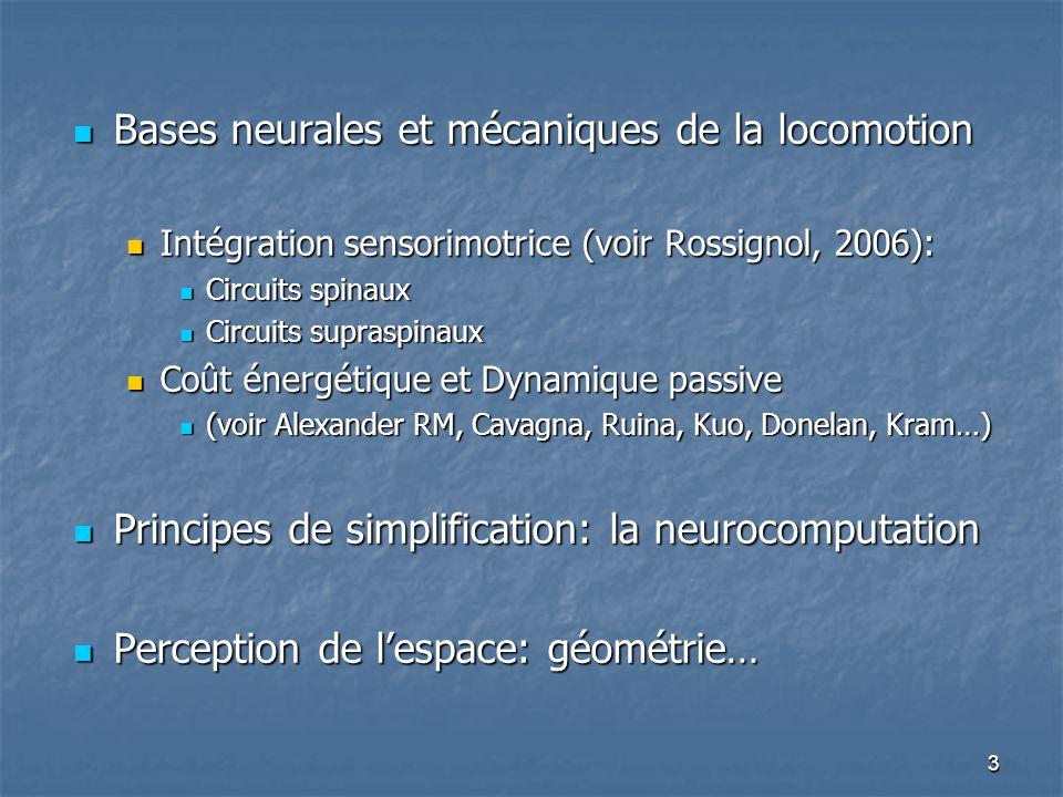 3 Bases neurales et mécaniques de la locomotion Bases neurales et mécaniques de la locomotion Intégration sensorimotrice (voir Rossignol, 2006): Intégration sensorimotrice (voir Rossignol, 2006): Circuits spinaux Circuits spinaux Circuits supraspinaux Circuits supraspinaux Coût énergétique et Dynamique passive Coût énergétique et Dynamique passive (voir Alexander RM, Cavagna, Ruina, Kuo, Donelan, Kram…) (voir Alexander RM, Cavagna, Ruina, Kuo, Donelan, Kram…) Principes de simplification: la neurocomputation Principes de simplification: la neurocomputation Perception de l'espace: géométrie… Perception de l'espace: géométrie…