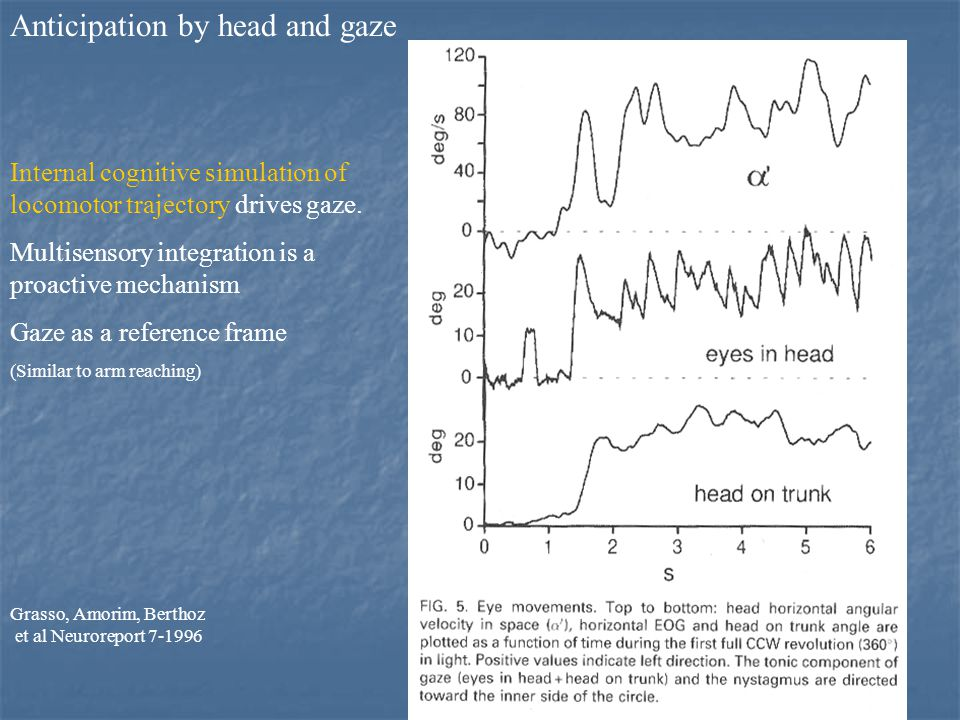 30 Anticipation by head and gaze Internal cognitive simulation of locomotor trajectory drives gaze.