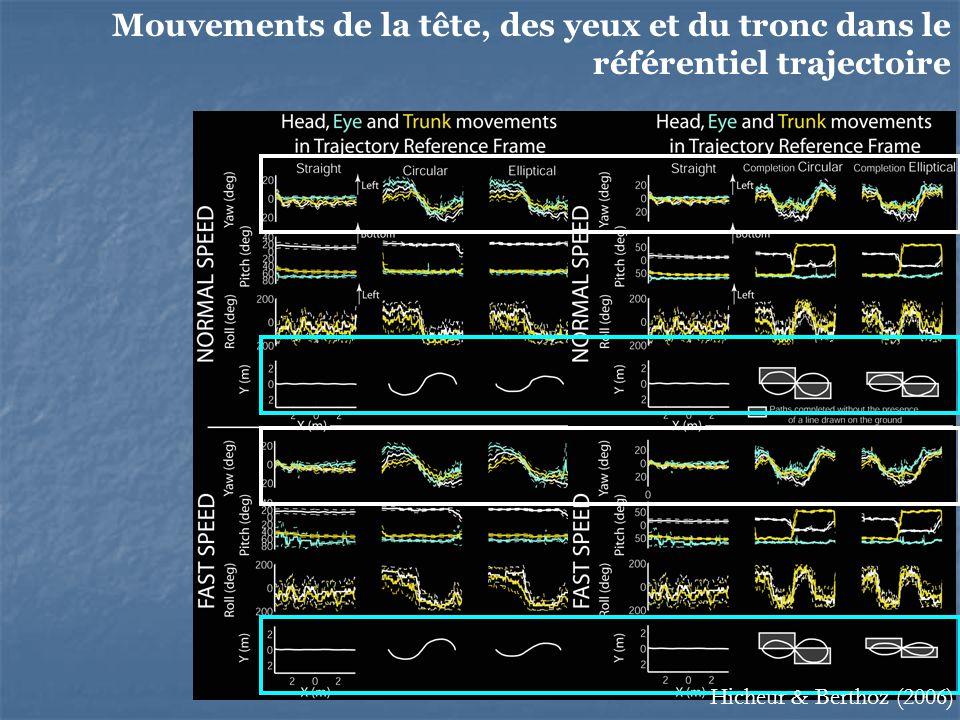 75 Mouvements de la tête, des yeux et du tronc dans le référentiel trajectoire Hicheur & Berthoz (2006)