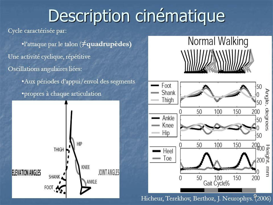 9 Description cinématique Cycle caractérisée par: l'attaque par le talon ( ≠quadrupèdes) Une activité cyclique, répétitive Oscillations angulaires liées: Aux périodes d'appui/envol des segments propres à chaque articulation Hicheur, Terekhov, Berthoz, J.